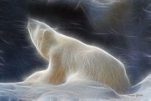 Espírito do Urso Branco